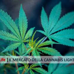 L'indagine sul mercato della cannabis light in Italia